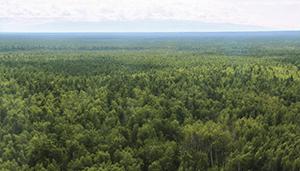 Официальные  новости  лесного хозяйства РОСЛЕСХОЗ
