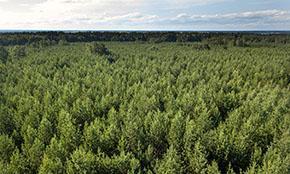 Минэкономразвития отрицательно оценило законопроект о лесах на сельхозземлях