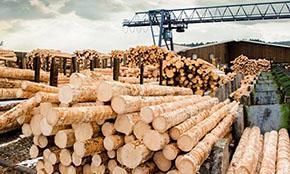 Конференция «Рынок леса и пиломатериалов России 2020» пройдет в Москве