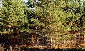 Владимир Путин дал шанс лесам на заброшенных сельхозземлях
