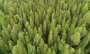 В России появится первый объект Национального лесного наследия