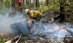 За неделю в России потушено более 330 лесных пожаров