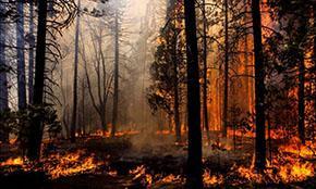 За сутки в российских лесах потушено 112 пожаров