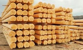 В январе-июне Россия увеличила долю экспорта лесоматериалов
