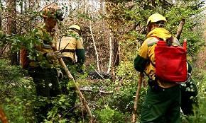 За неделю в лесах России ликвидировано 380 пожаров