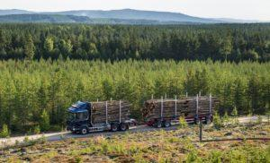 80% россиян обеспокоены проблемой нелегальных лесозаготовок в стране