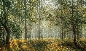 В России станет возможным частное лесопользование