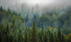 В 2021 году в России стартует второй цикл госинвентаризации лесов