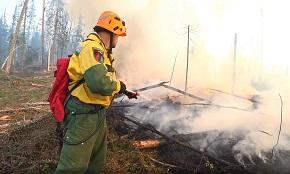 За неделю в России ликвидировано 193 лесных пожара