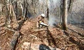 За неделю в лесах России потушен 21 пожар