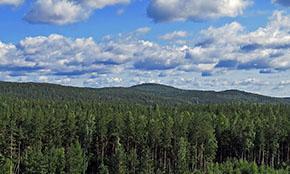 В Совете Федерации одобрили закон о недобросовестных арендаторах леса