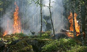 За минувшую неделю в России потушено 398 лесных пожаров