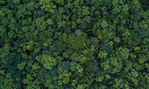 Эксперты считают, что сажать деревья «бессмысленно» в борьбе с изменением климата