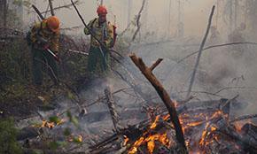 За неделю в лесах России ликвидировали 640 пожаров