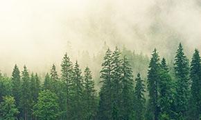 С 2022 года в России изменится лесоустройство
