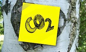 Лесоклиматических проектов недостаточно для достижения углеродной нейтральности